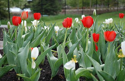 Olds College to See Increased Seats for Horticulture Students