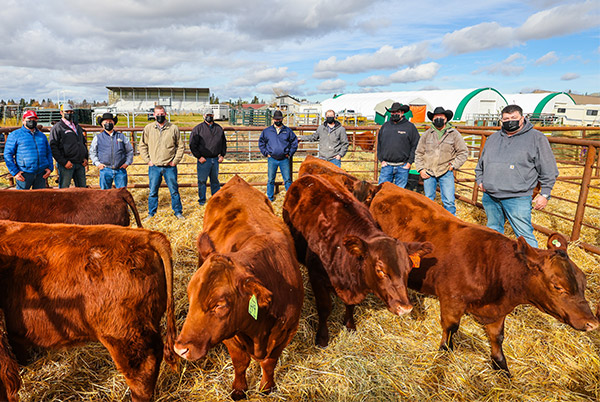 Red Angus Herd Donation