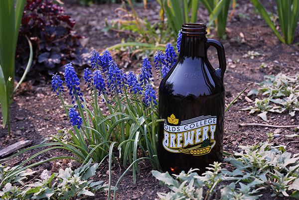 Olds College Brewery Bottle in Garden