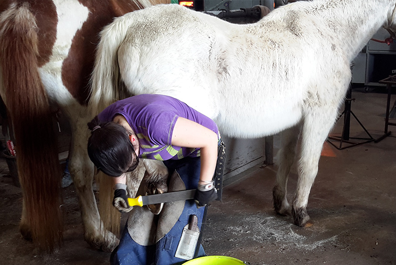 A student in the Olds College Hoof Care & Trimming Program.