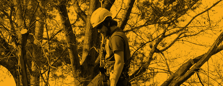 Utility tree worker standing in a tree